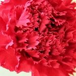 義母 母の日 花