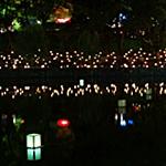 奈良 燈花会