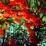 京都 紅葉 ライトアップ ランキング