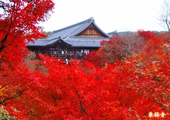 京都駅 付近 紅葉 東福寺