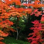 京都駅 付近 紅葉