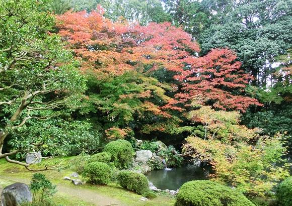 京都 随心院 紅葉