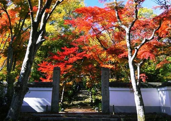 京都 嵐山 紅葉 浄住寺