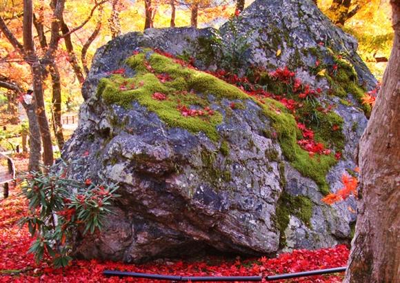 京都 嵐山 紅葉 獅子吼の庭