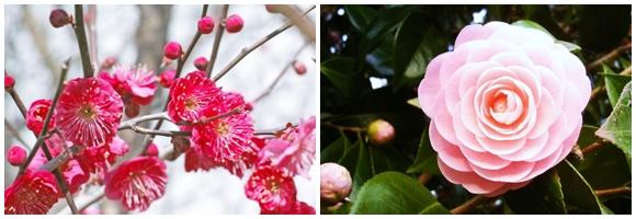京都 3月 イベント